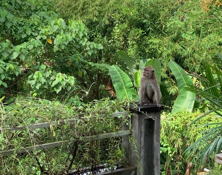 A monkey in Ubud, Bali greets a solo female traveler